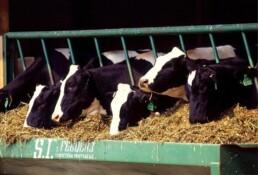 fabricación de piensos para animales